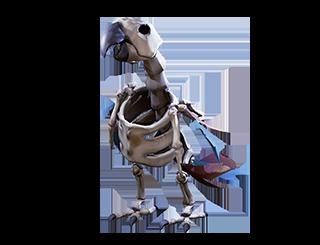 Enquêter sur le fléau squelette
